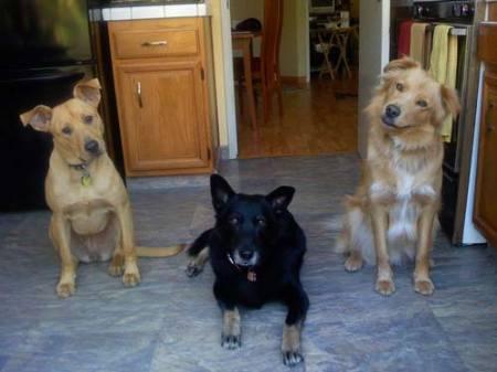 Tika, Babe & Sammy all want a cookie!
