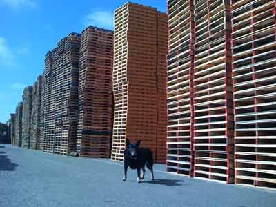 Babe in Oakland at the Pallet recycling facility