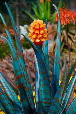 Kim Webster's Glass Agave