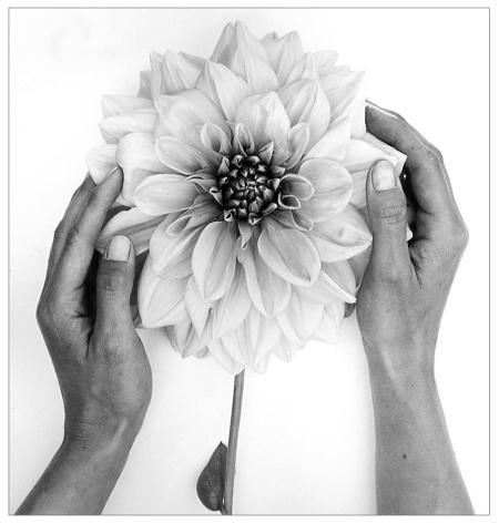 Hands and Dahlia