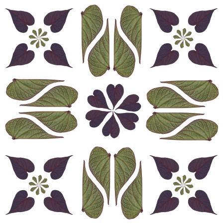 Botanical Photography Design